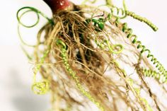 Genetically-engineered plants by Carole Collet produce food and lace