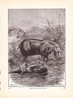 Hey, I found this really awesome Etsy listing at https://www.etsy.com/listing/73628287/1880-animal-print-hippopotamus-vintage