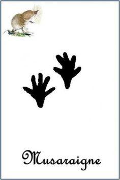 Musaraigne (Sorex araneus) Animal Tracks, Happy Trails, Mammals, Montessori, Stencils, Flora, Origami, Wild Animals, Wolf Pup