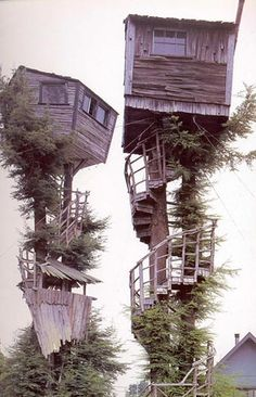Tree house ( @ Eureka, California ) :: Can you imagine the windy night, houses are waving like on a boat and wooden stairs making creaking noises.I want a tree house! Cool Tree Houses, House Trees, Unusual Homes, In The Tree, Big Tree, Play Houses, Dog Houses, Dream Houses, Fairy Houses