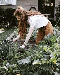 Images and videos of fashion gardening. Images and videos of fashion gardening. Style Anglais, Belle Plante, Slow Living, Dream Garden, Box Garden, Organic Gardening, Organic Mulch, Organic Plants, Small Plants