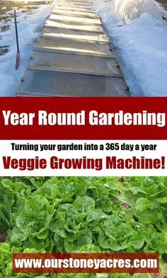 Year-Round Gardening, Learn how to turn your backyard garden into a 365 day a year, Veggie Growing Machine!! You will love this post!
