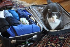 How to Pack for a Week in a Carry-on Bag. (I remember when I used to own cats and they would try to climb into my suitcases. Good times).