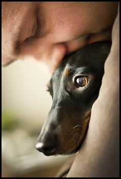 Doxie love....
