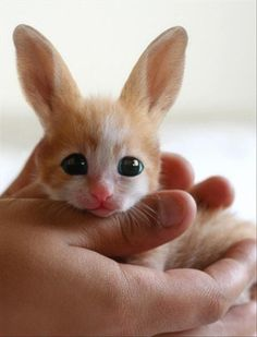 A bunnycat. I thought this was the creation of Ilona Andrews in Magic Breaks. :-)