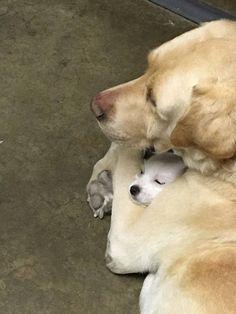 Hugs from Mum make everything better.