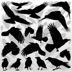 Crow And Feathers Silhouettes Illustration Collection Background.. Royalty Free…