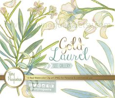 Laurel Gold Leaves Leaf clip art images watercolor hand painted PNG transparent background and JPG for blog cards invitations