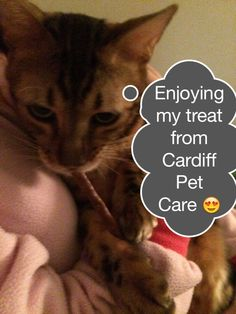hugs are free with Cardiff Pet Care!