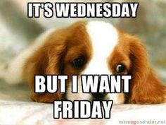 Humpday Humor Discover 25 Funny Wednesday Memes & Quotes To Get You Through The Rest Of The Week They dont call it Hump Day for nothing. Funny Wednesday Memes, Wednesday Hump Day, Happy Wednesday Quotes, Good Morning Wednesday, Good Morning Funny, Good Morning Quotes, Happy Friday, Wednesday Greetings, Morning Memes