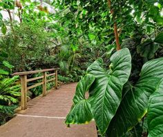 Conservatory Highlights Tour Brooklyn, NY #Kids #Events