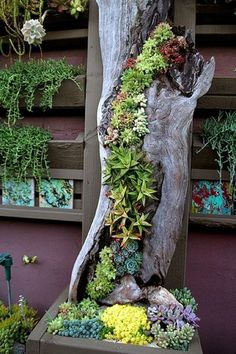 Make garden art using succulents and drift wood.