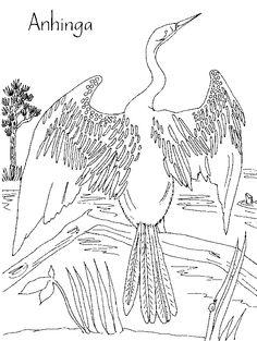florida bird coloring pages   Everglades National Park   Kid's Corner   Pinterest ...
