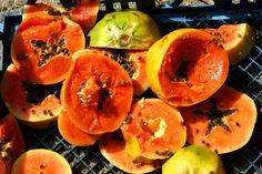 Owoce papaji, którymi karmiłam słonie