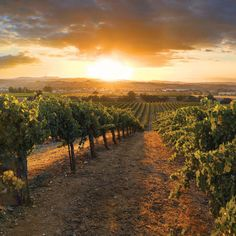 Explore the many wineries and vineyards of Paso Robles. California Coast, California Travel, Central California, The Wine Club, Wine Tasting Near Me, Paso Robles Wineries, Sonoma Wineries, Western Landscape, Spanish Wine