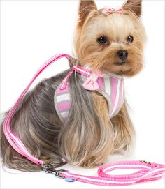 EasyGo Sweetbow Harness with Leash