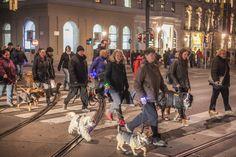 Sicherheit und Spaß beim ersten Beneful Night Walk für Hund & Halter | Fotograf: Philipp Lipiarski | Credit:Purina PetCare Österreich | Mehr Informationen und Bilddownload in voller Auflösung: http://www.ots.at/presseaussendung/OBS_20150301_OBS0009
