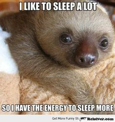 Funny Sloth Funny Animal Photos Funny Animal Quotes Funny Animal Sayings