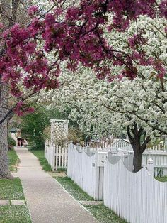 Landscaping Around Trees, Fence Landscaping, Backyard Fences, Garden Fencing, White Picket Fence, White Fence, Picket Fences, Wood Fences, Front Yard Fence