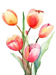 Stock image of 'Tulips flowers, Watercolor painting'