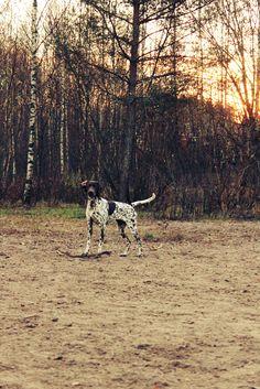 Autunum, stick, good weather =))