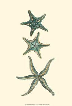 Aquamarine Starfish I Reproduction d'art