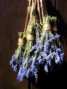 Hanging lavender keeps the flies out.