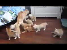 Kittens surprised to failure of mother