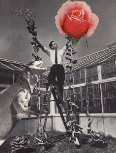 by Ville Javat.   Man offering his rose of love in a gray and scary world :-)