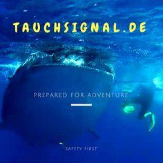 Tauchen in Mexiko, Yucatan. Tauchspot für Walhaie! Abenteuer pur. Safety First, Adventure, Mexico Yucatan, Diving, Safety, Adventure Movies, Adventure Books