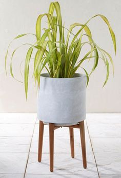 Large Indoor Plant Pots - Beautiful Large Indoor Plant Pots , Buy Tall Concrete Planter with Wooden Legs From the Next Uk Online Large Indoor Plants, Indoor Plant Pots, Indoor Planters, Garden Planters, Potted Plants, Planter Pots, Tall Planters, Concrete Planters, Metal Plant Stand