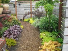 Easy native plants for the backyard