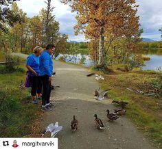 Gjester i Tromsø. #reiseliv #reiseblogger #reisetips #reiseråd  #Repost @margitvarvik (@get_repost)  Høst i Tromsø. Autumn im Tromso. Det er på tide at endene flyr sørover.