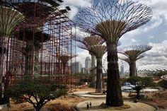 supertree singapore epiphyte gardens