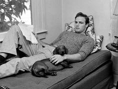 Bien avant Paris Hilton et son Chihuahua ou Blake Lively et son Caniche, les stars hollywoodiennes ont toujours aimé se faire photographier avec leur chien...