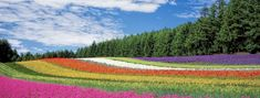 One of Japan's most popular summer destinations, head to Hokkaido to escape the summer heat and see the sprawling flower fields that brighten the landscape every year. Magic Places, Felder, Garden Care, Fauna, Love Images, Orange Flowers, Flora Flowers, Flowers Nature, Spring Flowers