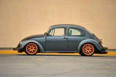 german look beetle - Google Search