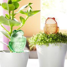 Waterreservoir kikker - om in plantenbak of bloempot te steken