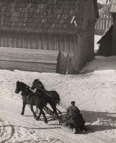 Martin Martinček - Konský záprah so saňami Horse Cart, Heart Of Europe, Eastern Europe, Old Pictures, Homeland, Old World, Countryside, Fairy Tales, Horses