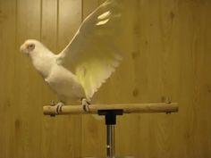 Image result for birds dancing gif