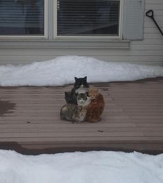 19 Cats Who Are Having A Life Crisis Because You Won't Let Them Inside