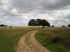 Richmond Park. Beautiful Places In The World, Wonderful Places, Richmond Park, Royal Park, London Places, Landscaping Software, Countryside, Pond, Places To Visit