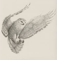 Self-employed artist Vanessa Foley has created the collection of awesome realistic sketches of birds below. She is currently based in Newcastle, England and her work has been featured in galleries in America, New Zealand and the UK.
