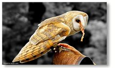 Riegersburg Owl, Birds, Animals, Photos, Animais, Animales, Animaux, Owls, Bird