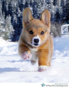 beautiful pup in snow