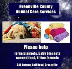 Greenville shelter in need of blankets for dog kennels as arctic air moves in