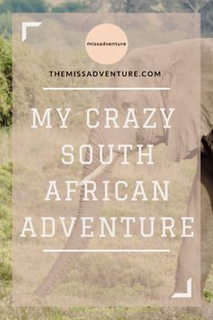 The MissAdventure inspires women to explore the globe together! Join our community of 000 amazing women and help us foster a culture of tolerance, learning and collaboration. Lions Head Cape Town, Game Reserve South Africa, Tanzania Safari, Wildlife Safari, Rhinos, Animal Games, My Crazy, African Safari, Africa Travel