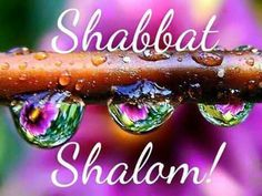 Purple SHABBAT                                                       … Sabbath Rest, Happy Sabbath, Sabbath Day, Jewish Customs, Shabbat Shalom Images, Sabbath Quotes, Good Shabbos, Shavua Tov, Messianic Judaism