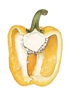 Yellow capsicum watercolour by Suzanne Houghton