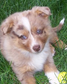Sweet Elle. Corgi, Pets, Sweet, Animals, Animals And Pets, Animales, Animaux, Corgis, Animal